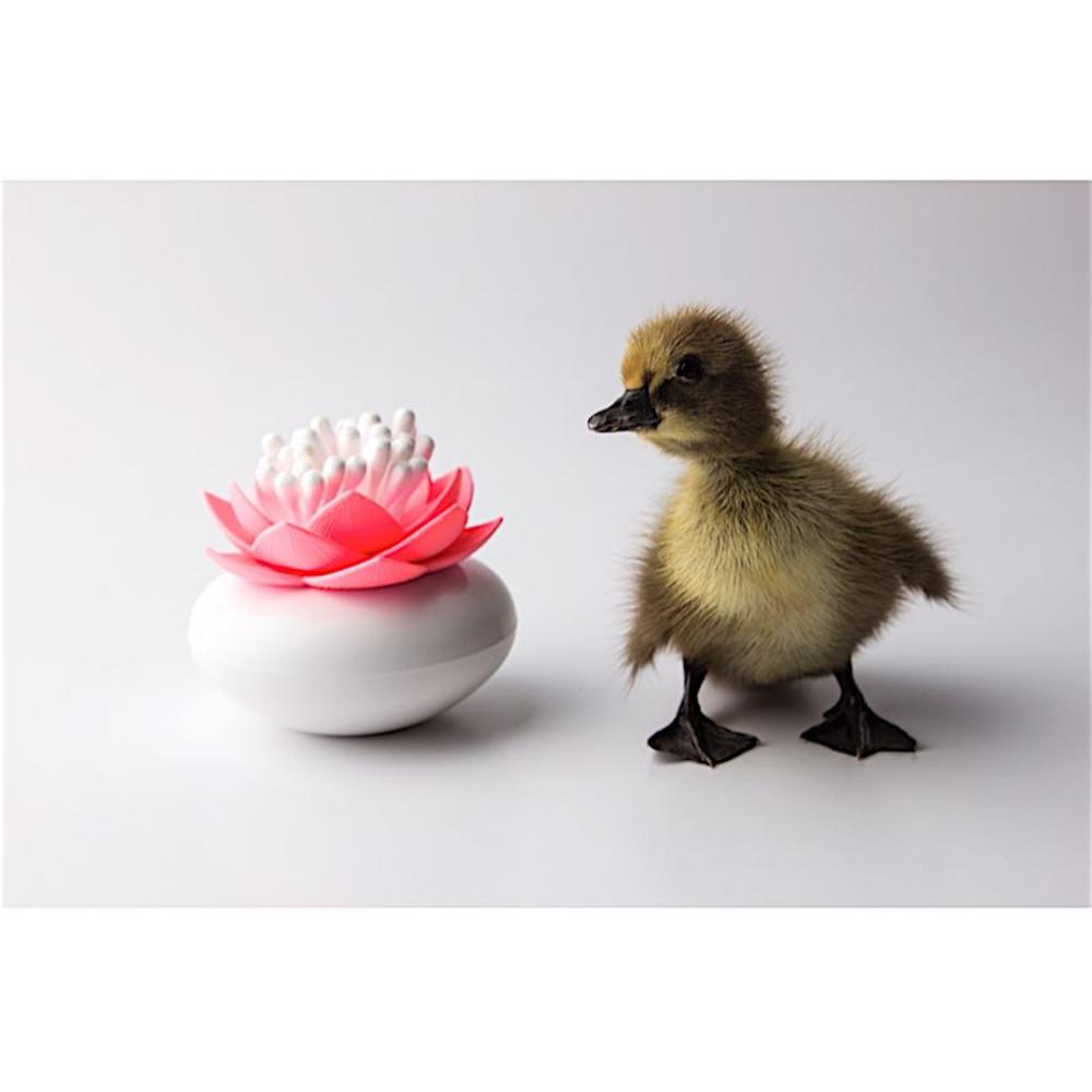 Lotus rose duck in-situ 01